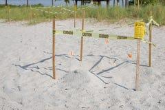 Προστατευμένες φωλιές χελωνών θάλασσας στοκ φωτογραφίες με δικαίωμα ελεύθερης χρήσης