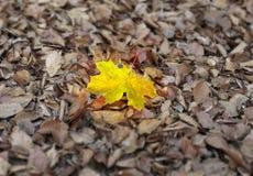 προσωπικότητα φθινοπώρο&upsilo στοκ φωτογραφίες με δικαίωμα ελεύθερης χρήσης