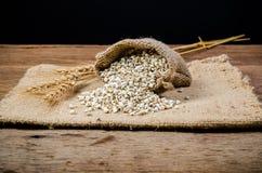 προϊόντα γεωργίας, job& x27 δάκρυα του s Στοκ εικόνα με δικαίωμα ελεύθερης χρήσης