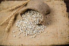 προϊόντα γεωργίας, job& x27 δάκρυα του s Στοκ Φωτογραφία