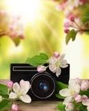 Πρωί άνοιξη σε έναν οπωρώνα μήλων Αναδρομική κάμερα και ανθίζοντας δέντρο μηλιάς Έμπνευση άνοιξη Στοκ Εικόνα