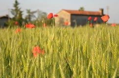 πρωί αγροτικό στοκ φωτογραφίες με δικαίωμα ελεύθερης χρήσης