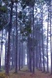 πρωί ελαφριάς ομίχλης Στοκ φωτογραφίες με δικαίωμα ελεύθερης χρήσης