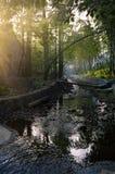 πρωί επαρχίας Στοκ Φωτογραφία
