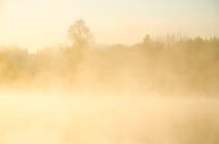πρωί λιβαδιών ομίχλης πέρα από το ύδωρ γύρω από τη λίμνη αυξηθείτε τη σημύδα Στοκ Φωτογραφίες