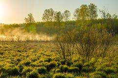 πρωί λιβαδιών ομίχλης πέρα από το ύδωρ γύρω από τη λίμνη αυξηθείτε τη σημύδα Στοκ Εικόνες
