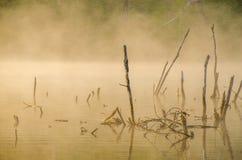 πρωί λιβαδιών ομίχλης πέρα από το ύδωρ γύρω από τη λίμνη αυξηθείτε τη σημύδα Στοκ Φωτογραφία