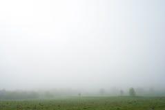 πρωί λιβαδιών ομίχλης πέρα από το ύδωρ Δέντρα στην ομίχλη ομιχλώδης καιρός Κακή διαφάνεια Στοκ Εικόνες