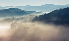 πρωί λιβαδιών ομίχλης πέρα από το ύδωρ Στοκ Εικόνες