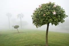 πρωί λιβαδιών ομίχλης πέρα από το ύδωρ Στοκ φωτογραφίες με δικαίωμα ελεύθερης χρήσης