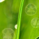 πρωί λογότυπων χλόης ανακύκλωσης Στοκ φωτογραφίες με δικαίωμα ελεύθερης χρήσης