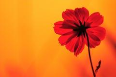 πρωί λουλουδιών Στοκ εικόνα με δικαίωμα ελεύθερης χρήσης