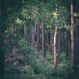 Πρωί με τον ήλιο στα ξύλα - στιγμιαία εκλεκτής ποιότητας τετραγωνική φωτογραφία Στοκ Φωτογραφίες