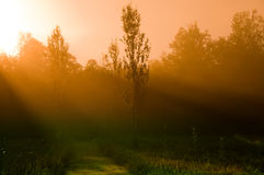 πρωί μυστικό Στοκ εικόνες με δικαίωμα ελεύθερης χρήσης