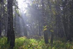 πρωί ομίχλης Στοκ φωτογραφίες με δικαίωμα ελεύθερης χρήσης