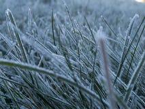 πρωί παγετού Στοκ φωτογραφία με δικαίωμα ελεύθερης χρήσης