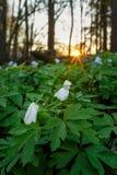 Πρωί σε ένα δάσος άνοιξη Στοκ φωτογραφίες με δικαίωμα ελεύθερης χρήσης