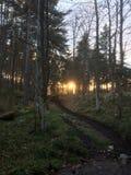 Πρωί στα δάση στοκ φωτογραφίες με δικαίωμα ελεύθερης χρήσης