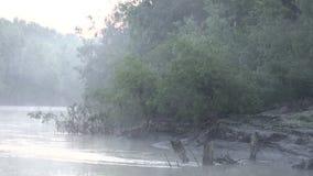 Πρωί στον ποταμό στην Ιταλία, μεγάλος ήχος των πουλιών απόθεμα βίντεο