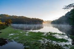 Πρωί στο δάσος με τη στρατοπέδευση στην υδρονέφωση, πόνος Ung, Ταϊλάνδη Στοκ Φωτογραφίες