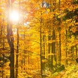 Πρωί στο δάσος φθινοπώρου Στοκ φωτογραφία με δικαίωμα ελεύθερης χρήσης