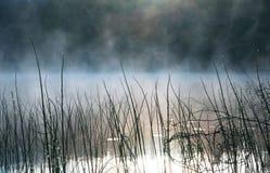 Πρωί στο έλος, έλος Νερό και χλόη, δροσιά Καρελία Στοκ Φωτογραφία