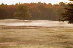 Πρωί στο γήπεδο του γκολφ στοκ εικόνα