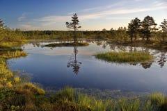 πρωί στο εθνικό πάρκο Lahemaa, Εσθονία Στοκ εικόνες με δικαίωμα ελεύθερης χρήσης