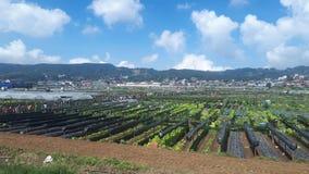 Πρωί στο όμορφο αγρόκτημα φραουλών στοκ φωτογραφία