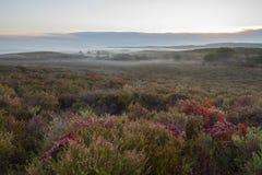 Πρωί της Misty με την ανατολή στο λαντ Στοκ Εικόνες