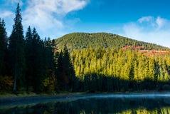 Πρωί της Misty στη δασική λίμνη στα βουνά Στοκ εικόνες με δικαίωμα ελεύθερης χρήσης