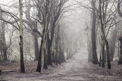 Πρωί της Misty στο ρείκι Hampstead, Λονδίνο Στοκ φωτογραφίες με δικαίωμα ελεύθερης χρήσης