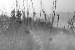 Πρωί της Misty Στοκ Εικόνες
