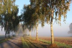 Πρωί-τραχύς στην ομίχλη Στοκ εικόνες με δικαίωμα ελεύθερης χρήσης