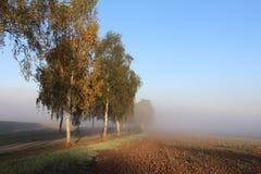 Πρωί-τραχύς στην ομίχλη Στοκ Εικόνα