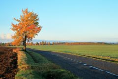 πρωί φθινοπώρου ηλιόλου&sigma στοκ εικόνα