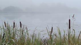 Πρωί φθινοπώρου της Misty φιλμ μικρού μήκους