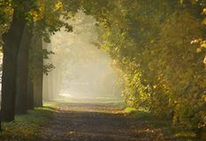 Πρωί φθινοπώρου Στοκ φωτογραφία με δικαίωμα ελεύθερης χρήσης