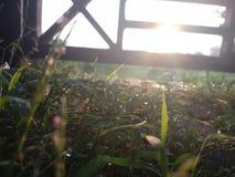 Πρωί χλόης Στοκ Φωτογραφία