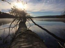 Πρωί Στοκ Φωτογραφίες