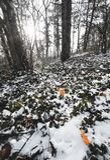 Πρωί Beatifull sunrays δάσος, δέντρα που καλύπτονται στο χειμερινό με το χιόνι στο υπόβαθρο στοκ φωτογραφία με δικαίωμα ελεύθερης χρήσης