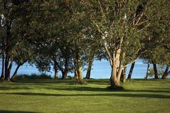 Πρωί Dawn Sunrise, δέντρα αρχών του καλοκαιριού κοντά στο φωτεινό χορτοτάπητα Parkland όχθης ποταμού οριζόντιο Στοκ Φωτογραφία