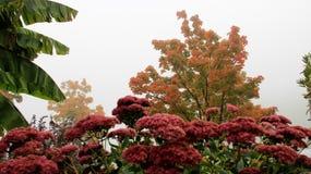 Πρωί Misty το φθινόπωρο με το λουλούδι άνθισης Στοκ Φωτογραφία