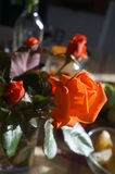 Πρωί roses1 Στοκ Εικόνες
