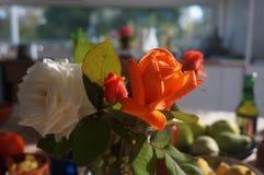 Πρωί roses6 Στοκ Εικόνα