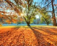Πρωί sunrays στο πρόσφατο δάσος φθινοπώρου στοκ εικόνα