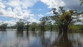 Πρωινή άποψη της λιμνοθάλασσας Cuyabeno, μέσα στη Faunistic επιφύλαξη παραγωγής Cuyabeno στοκ εικόνες με δικαίωμα ελεύθερης χρήσης