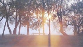 Πρωινού μιας νέας γυναίκας σε ένα πάρκο πόλεων κατά μήκος της όχθης ποταμού σε μια πυκνή ομίχλη Υγιής τρόπος ζωής σε οποιοδήποτε  απόθεμα βίντεο