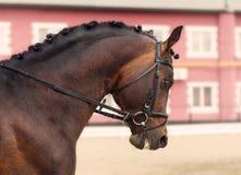 Πρωτοπόρος εκπαίδευσης αλόγου σε περιστροφές Στοκ εικόνα με δικαίωμα ελεύθερης χρήσης