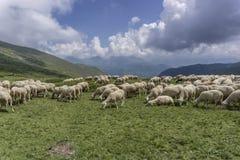 πρόβατα βουνών κοπαδιών ανασκόπησης Στοκ εικόνες με δικαίωμα ελεύθερης χρήσης